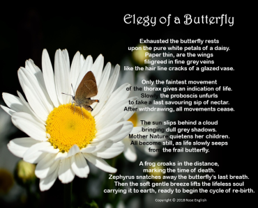190418 Elegy of a Butterfly
